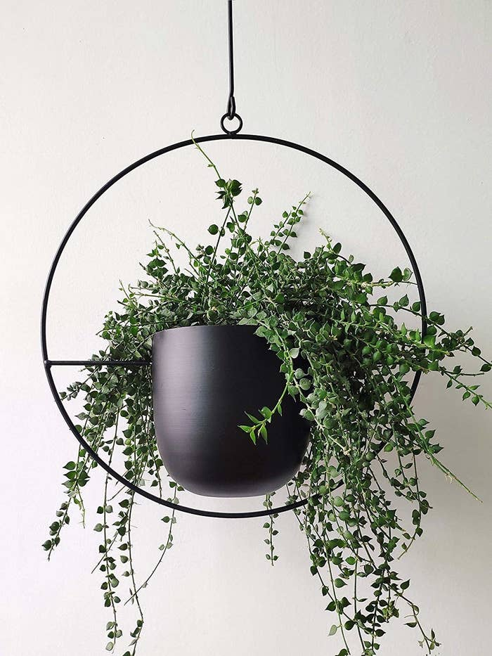 A black, circular planter with a fern inside that hangs from the ceiling.