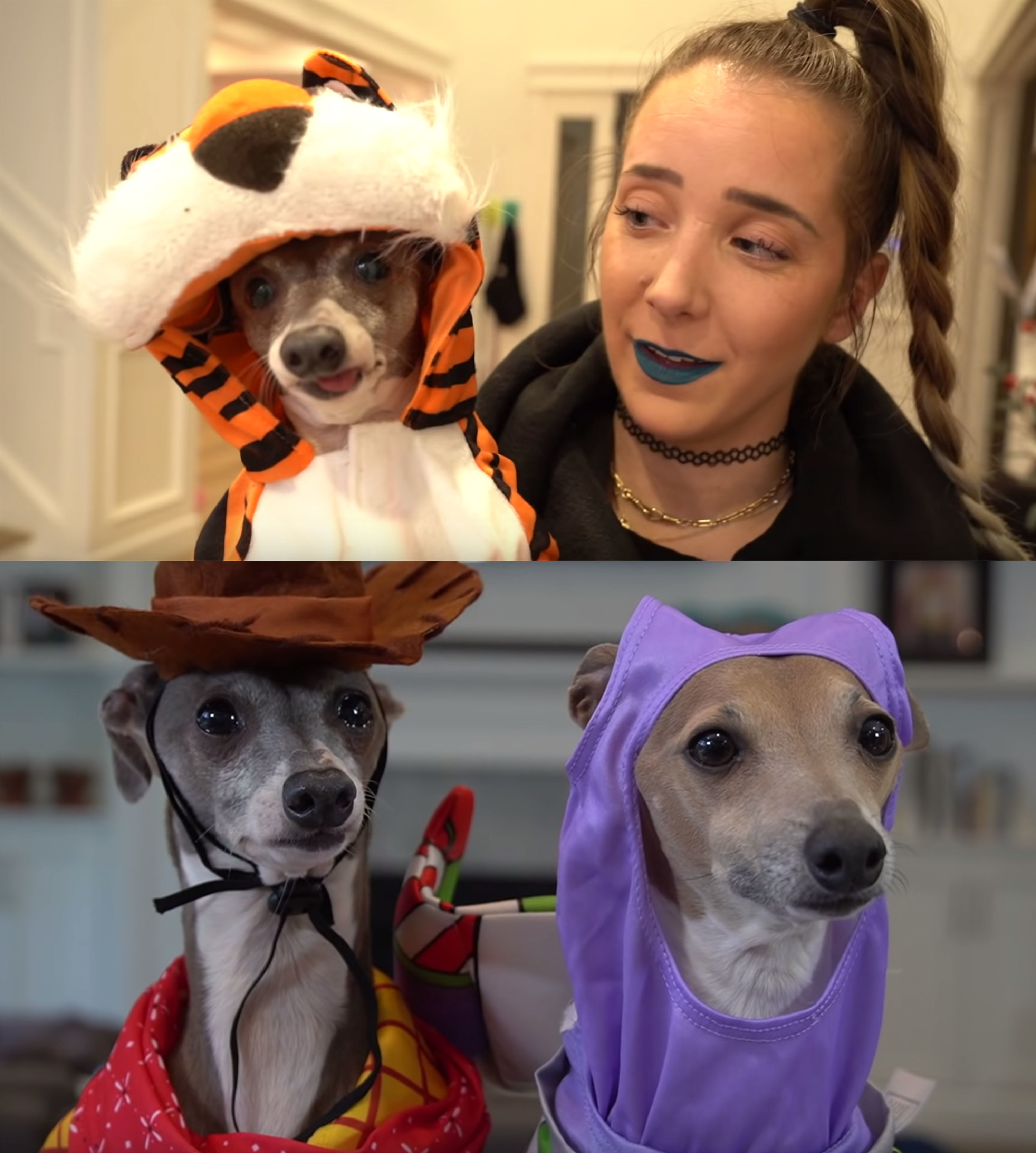 17 Times Jenna Marbles' Dog Kermit Sparked Pure Joy - Aaj ...