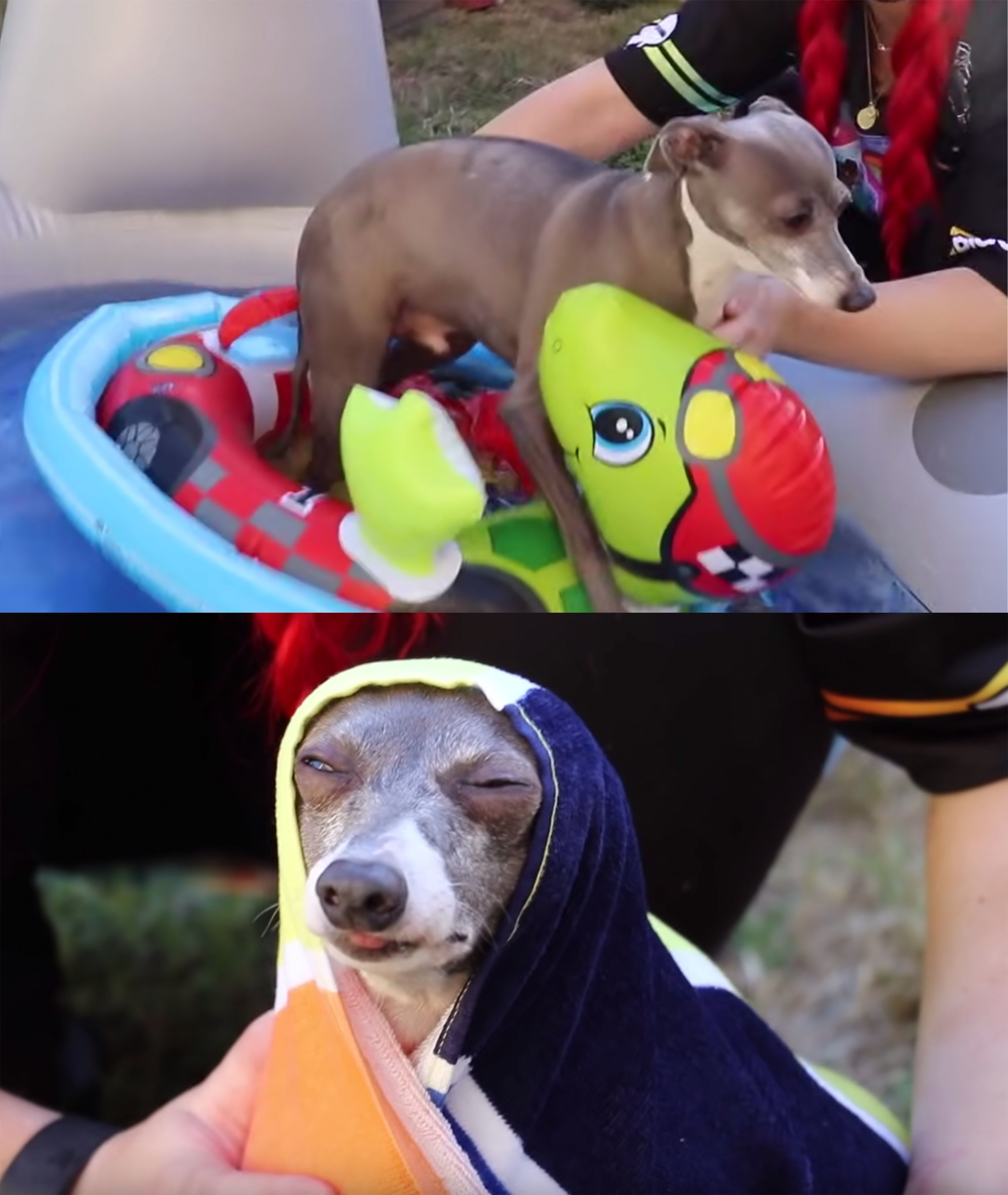 17 Jenna Marbles Kermit The Dog Moments
