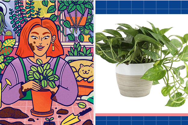 Houseplants You'll Want In Your Home If You Suck At Keeping Plants Alive