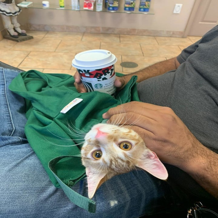 A reviewer photo of a cat in the bag