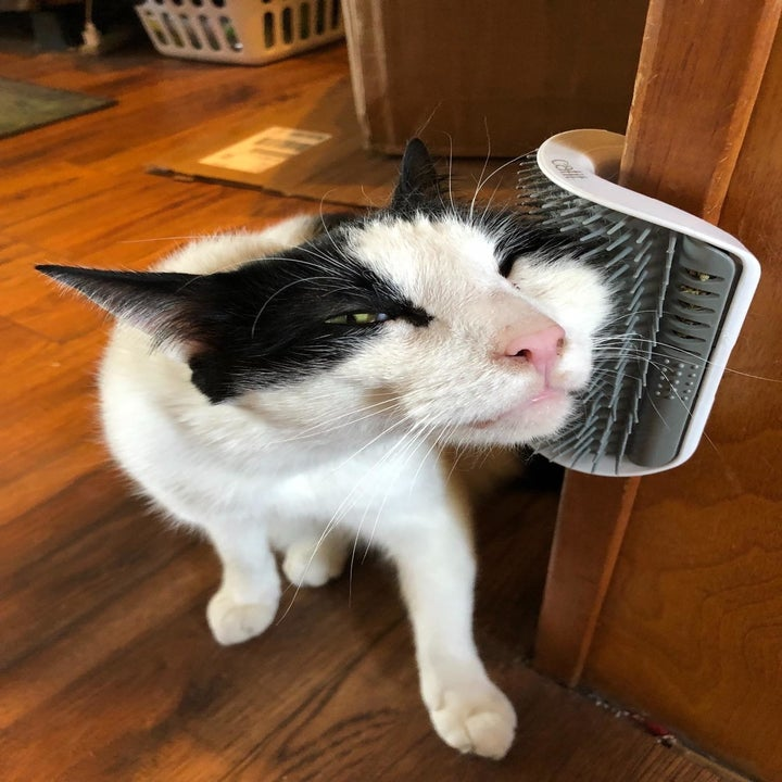 Reviewer photo of their cat happily rubbing its face on the brush