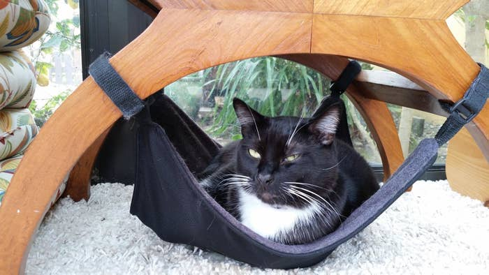 reviewer's pic of cat laying in the hammock underneath a chair