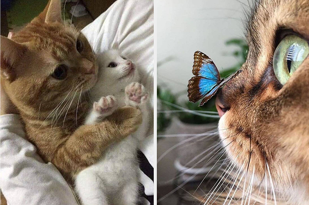 19 Wholesome Moments That Prove We Absolutely Do Not Deserve Cats