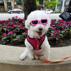 A dog with pink glasses