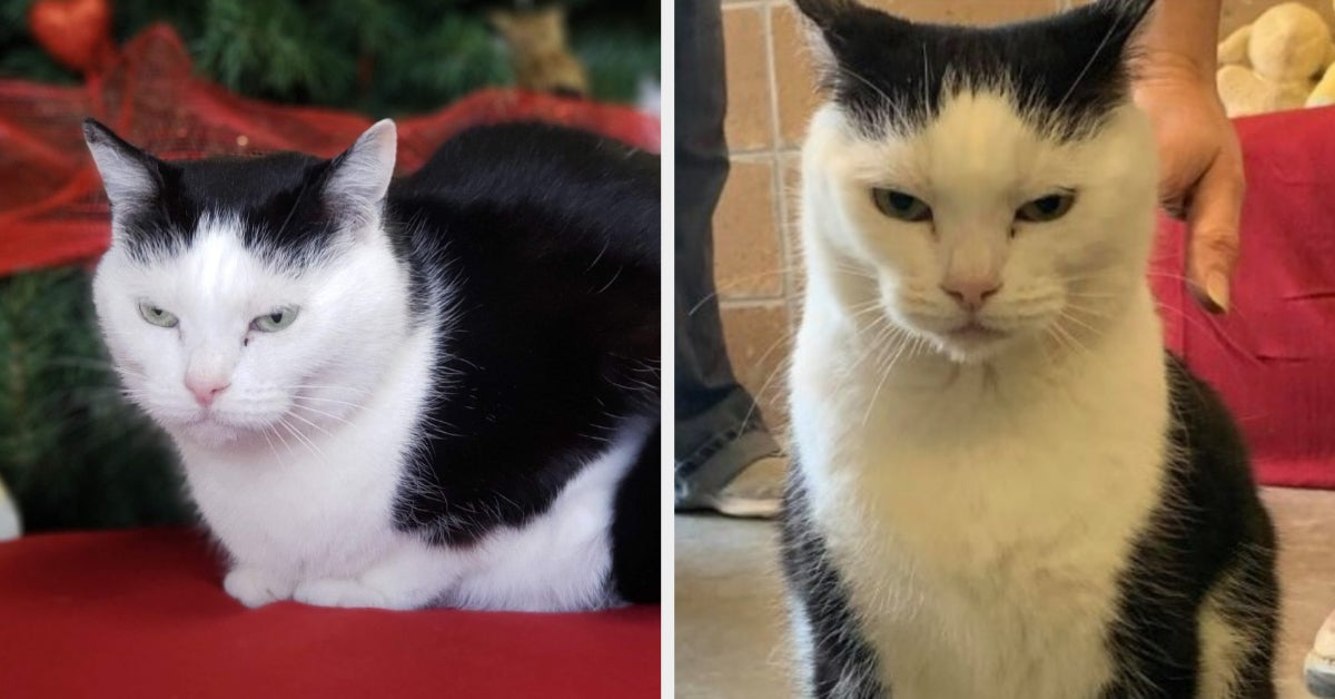 "The ""World's Worst Cat"" Is Up For Adoption And She Looks Adorably Evil"