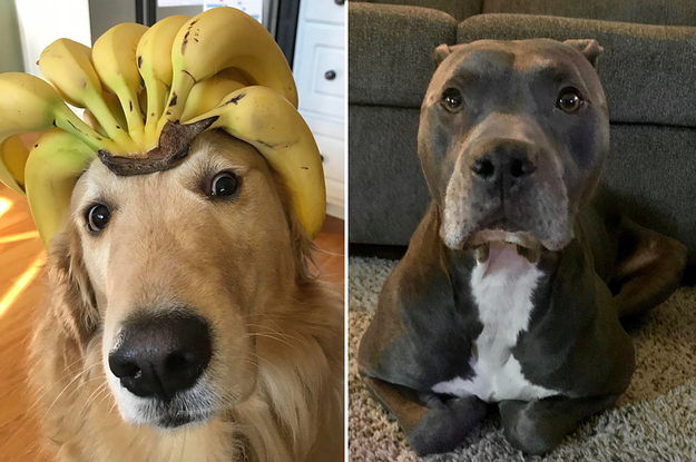 14 Dog Posts From This Week That I Firmly Believe Everyone Should See