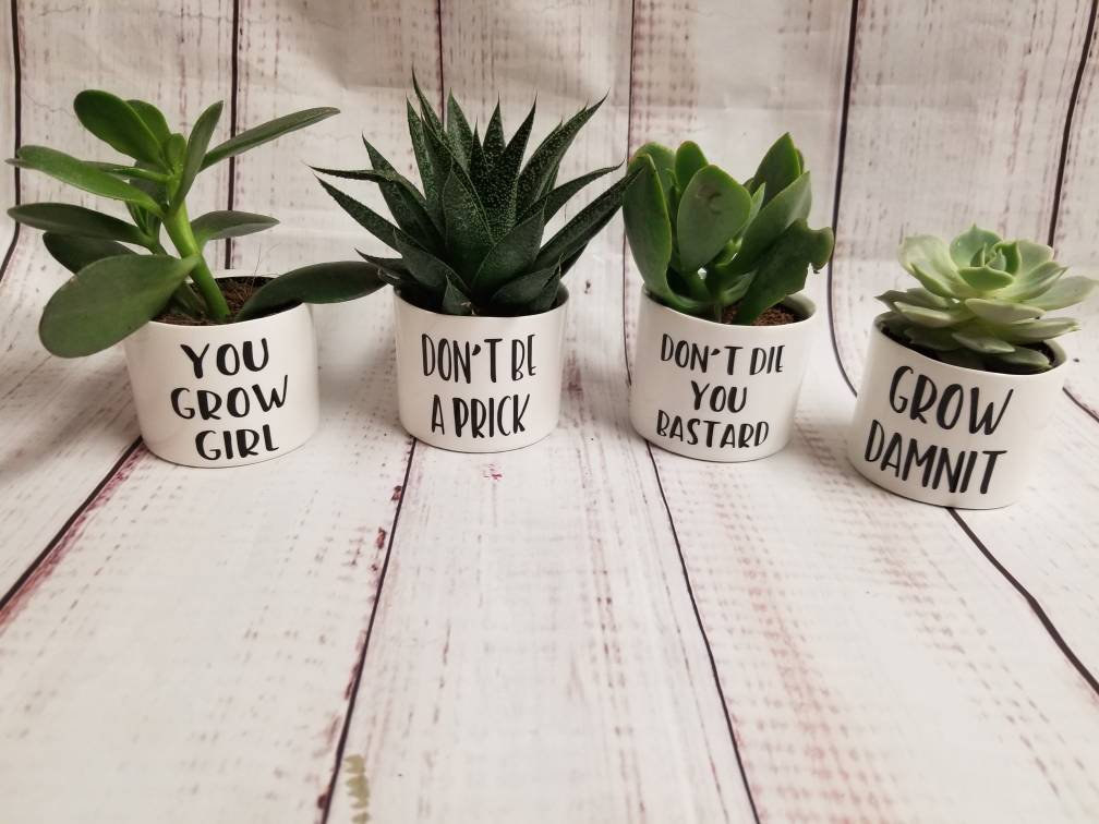 set of plant pots with funny captions like don't be a prick
