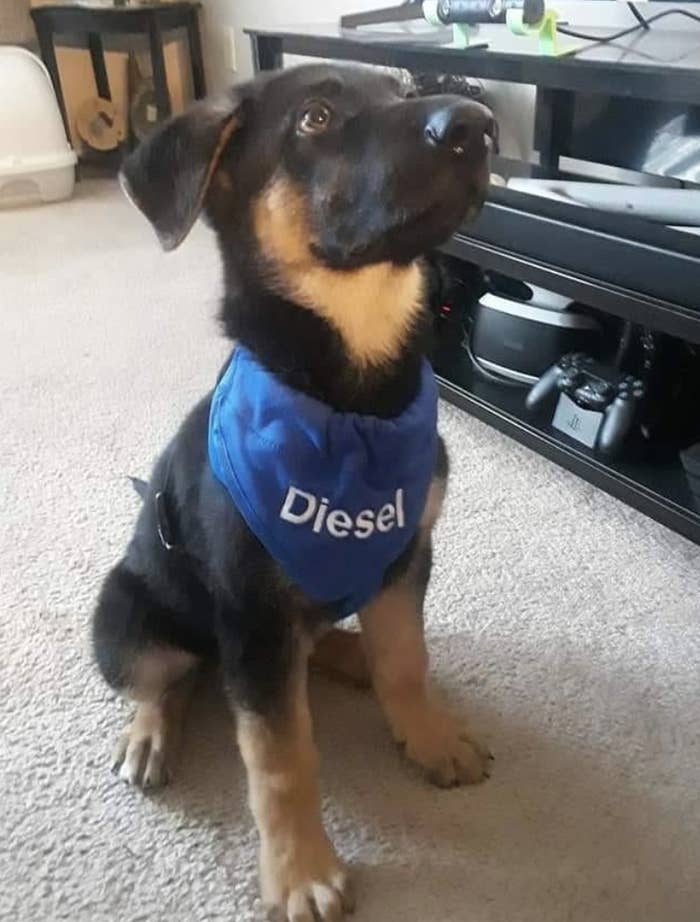Reviewer photo of dog wearing personalized bandana