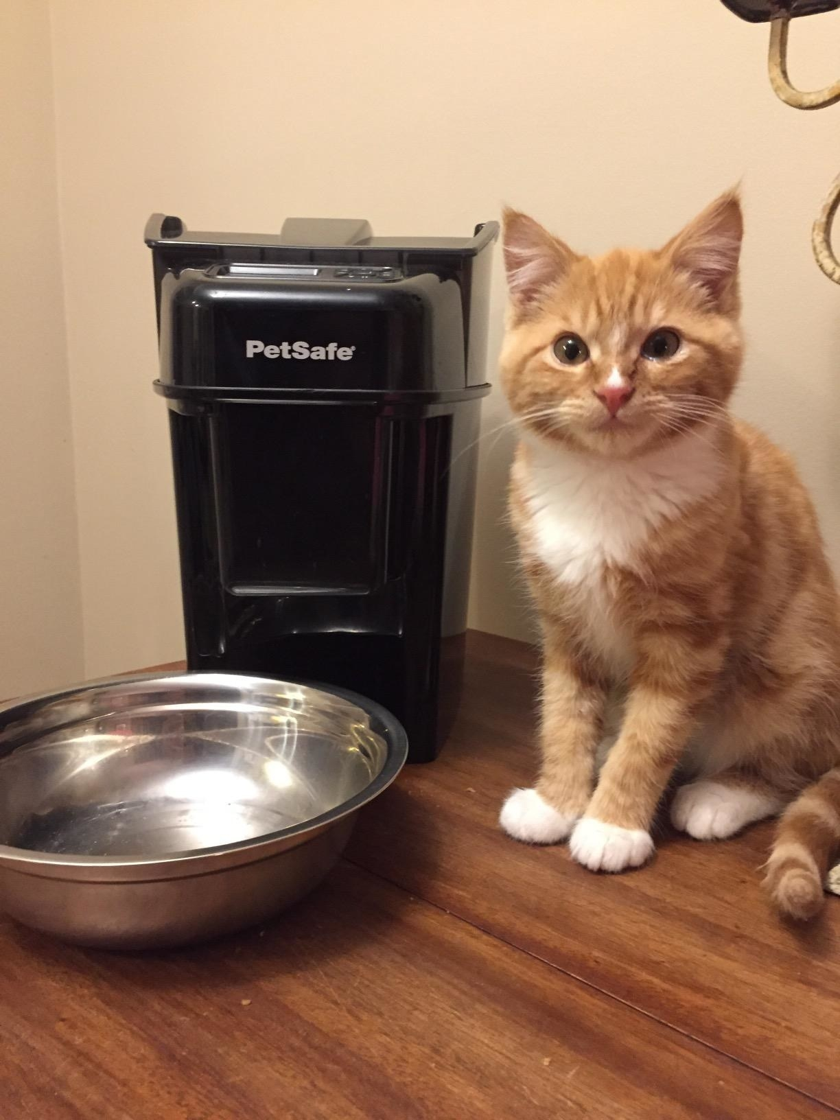 reviewer photo showing their cat next to their automatic feeder
