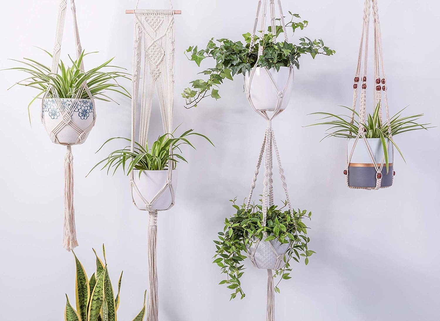 Five plants in macrame plant holders