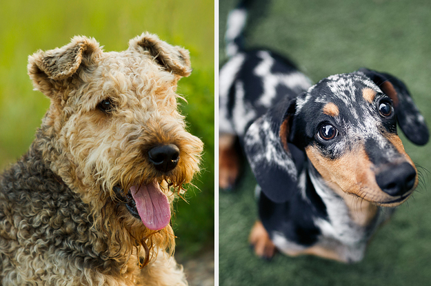 Hang Out With 6 Dogs And We'll Reveal Your True Self