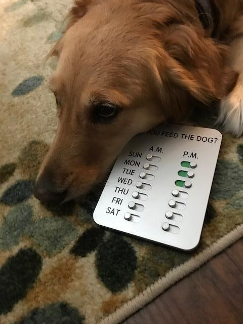 dog poses with device that has two sliders for each day of the week