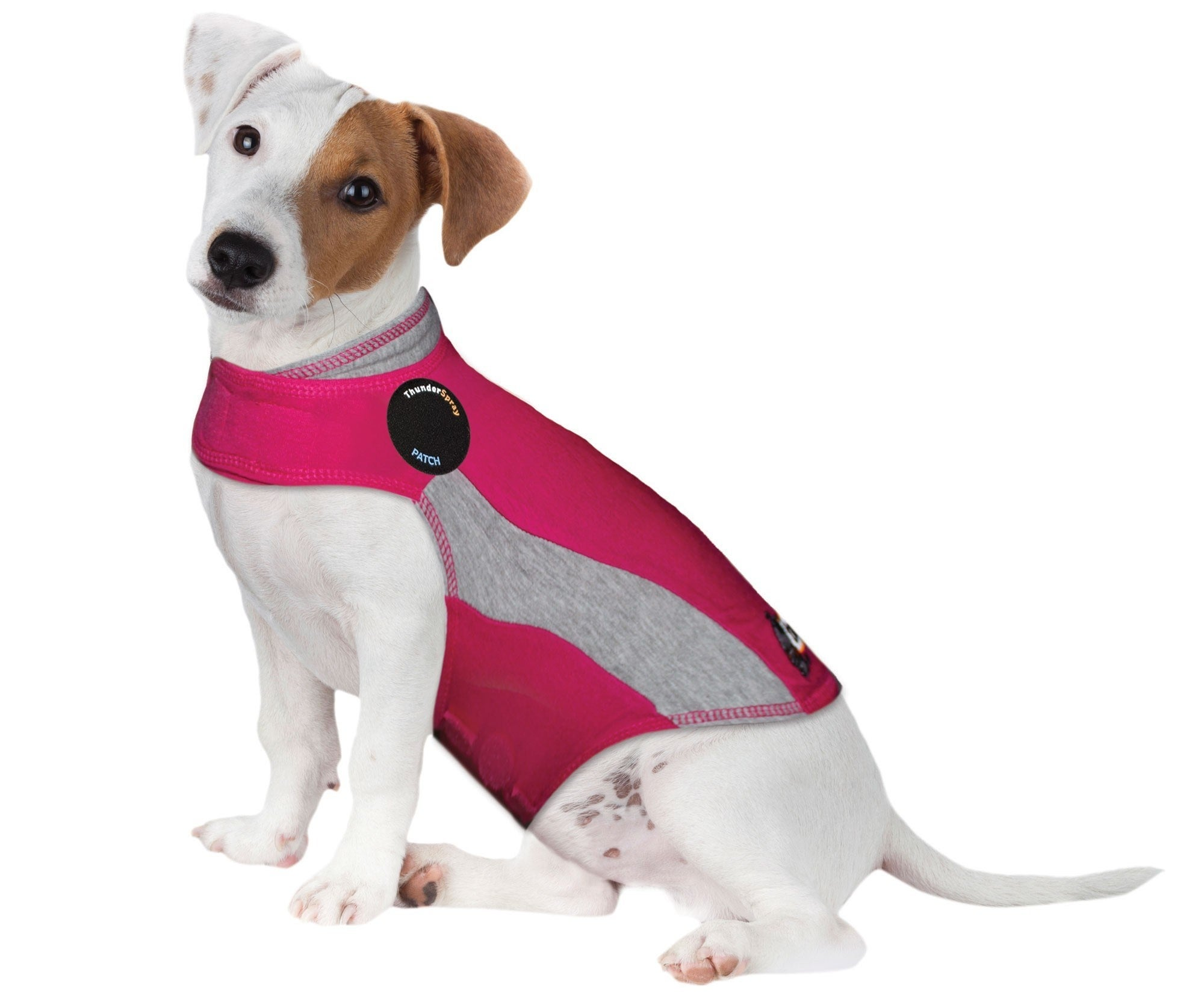 A dog in the form-fitting, sleeveless jacket