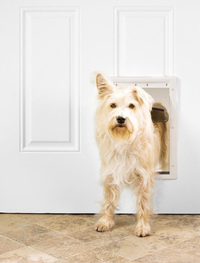 A dog going through the pet door