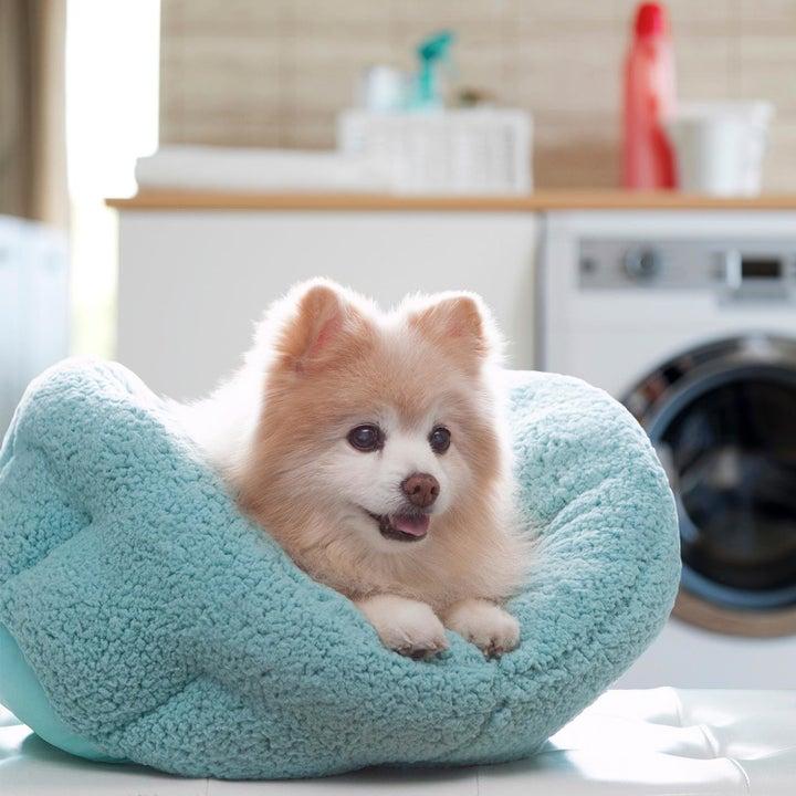 A dog in a soft blue pet bed