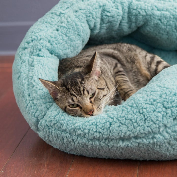 A cat nestling in the same bed
