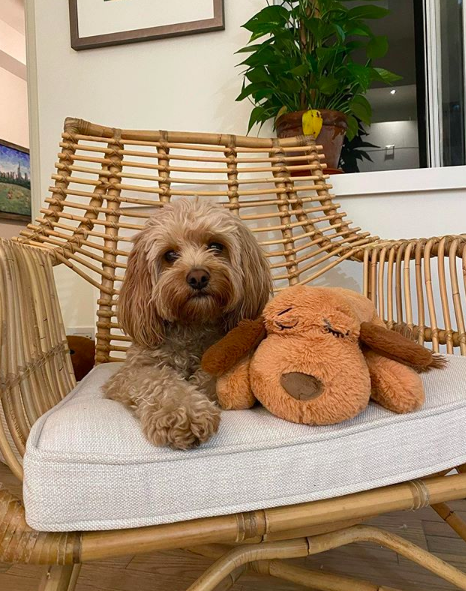 BuzzFeed writer's dog sitting with their stuffed dog