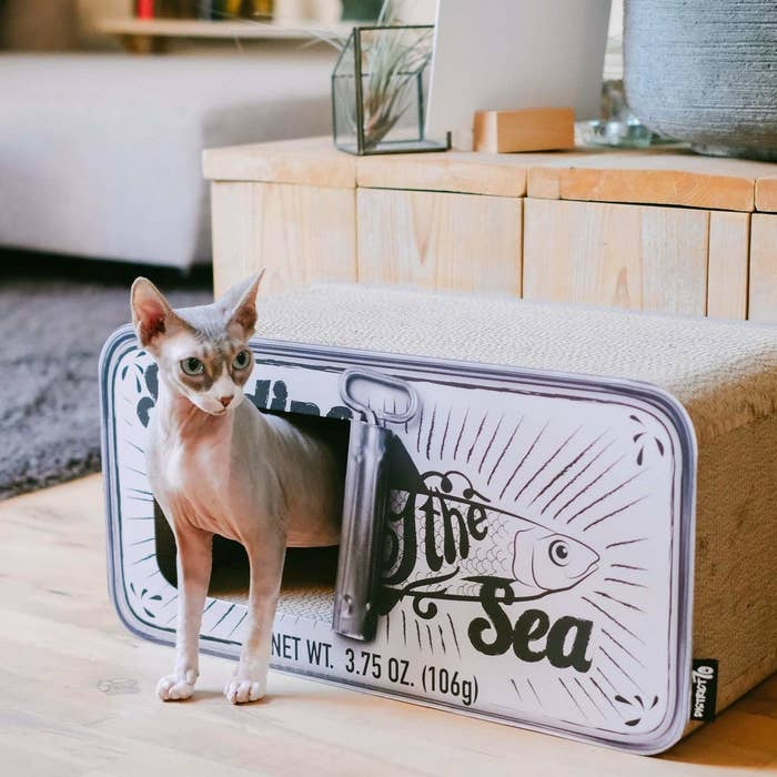 Hairless cat walking out of rectangular cat bed designed to look like opened can of sardines