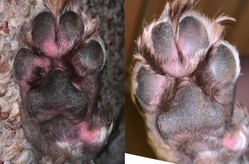 on the left, a reviewer's dog's paw looking red and irritated, and on the right, the same paw looking less red and irritated