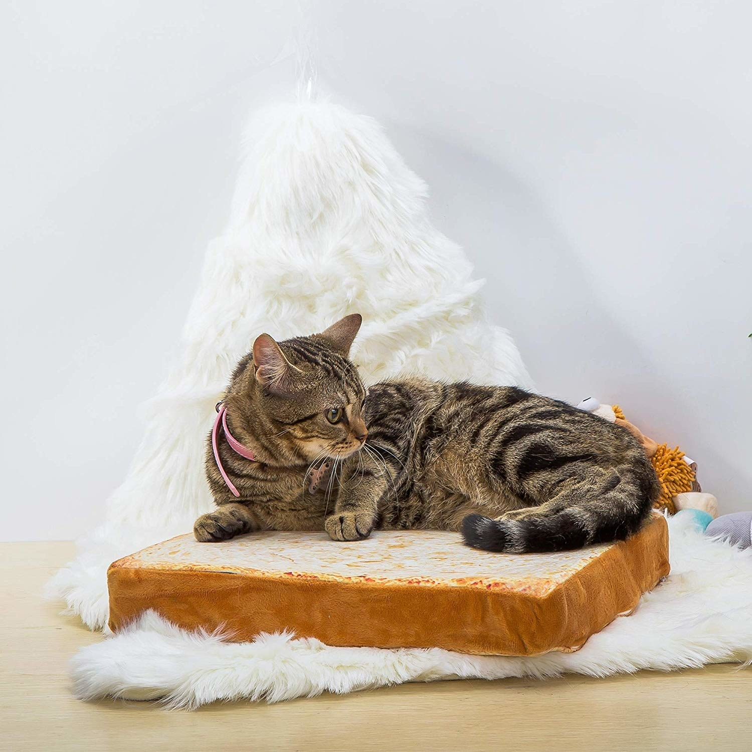 A cat lying on a slice of cat toast