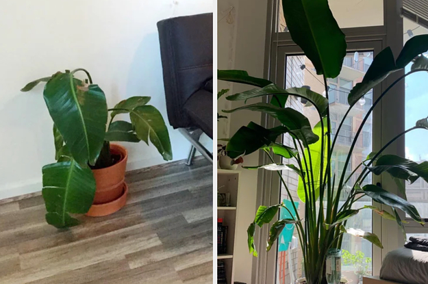17 Photos Of Plants Before And After Their Rescue That Are Oddly Moving