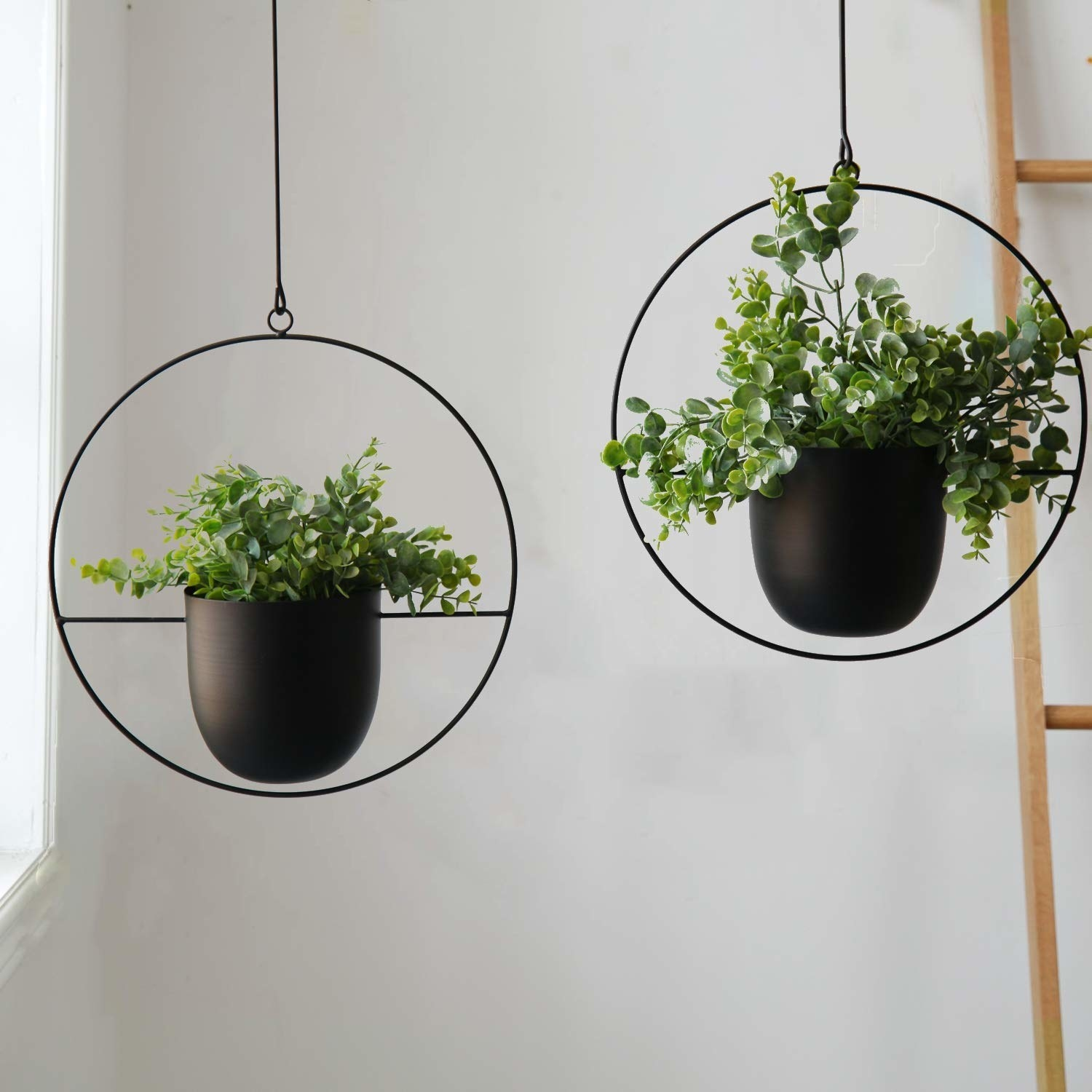 Two hanging planters with circle metal frames