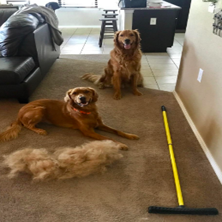 Different reviewer image with two dogs sitting beside a dog-sized pile of fur