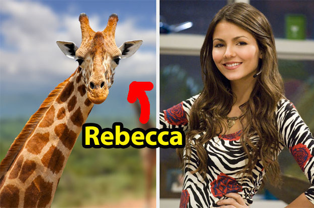 Assign Names To These Animals And We'll Reveal What Percent Tori Vega You Are