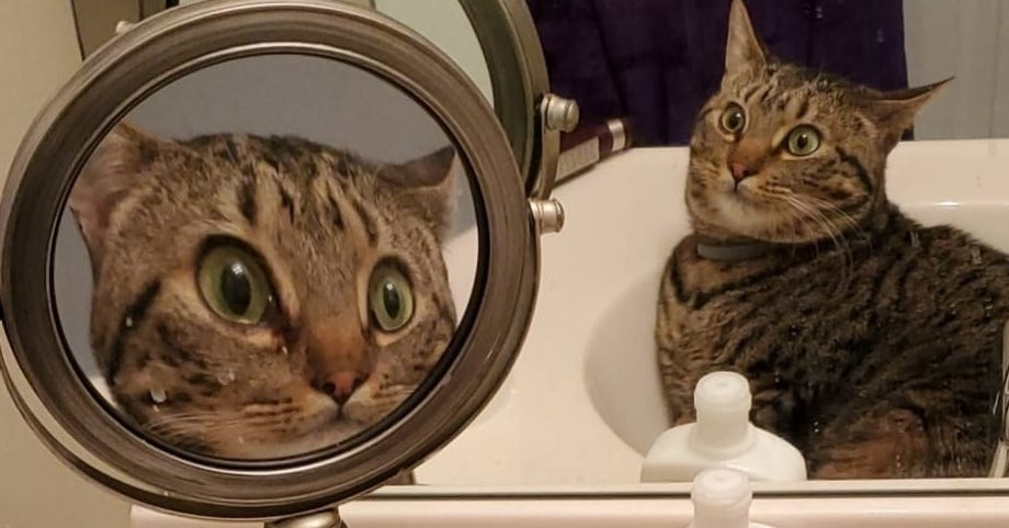 This Is Roscoe And A Photo Of Him In A Magnifying Mirror Has Taken The Internet By Storm