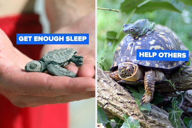 These Turtles Have Confidence Tips That Will Bring You Out Of Your Shell