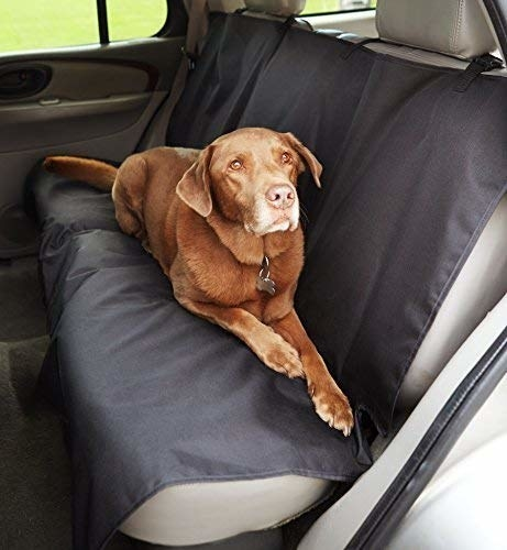 a dog laying on the seat cover