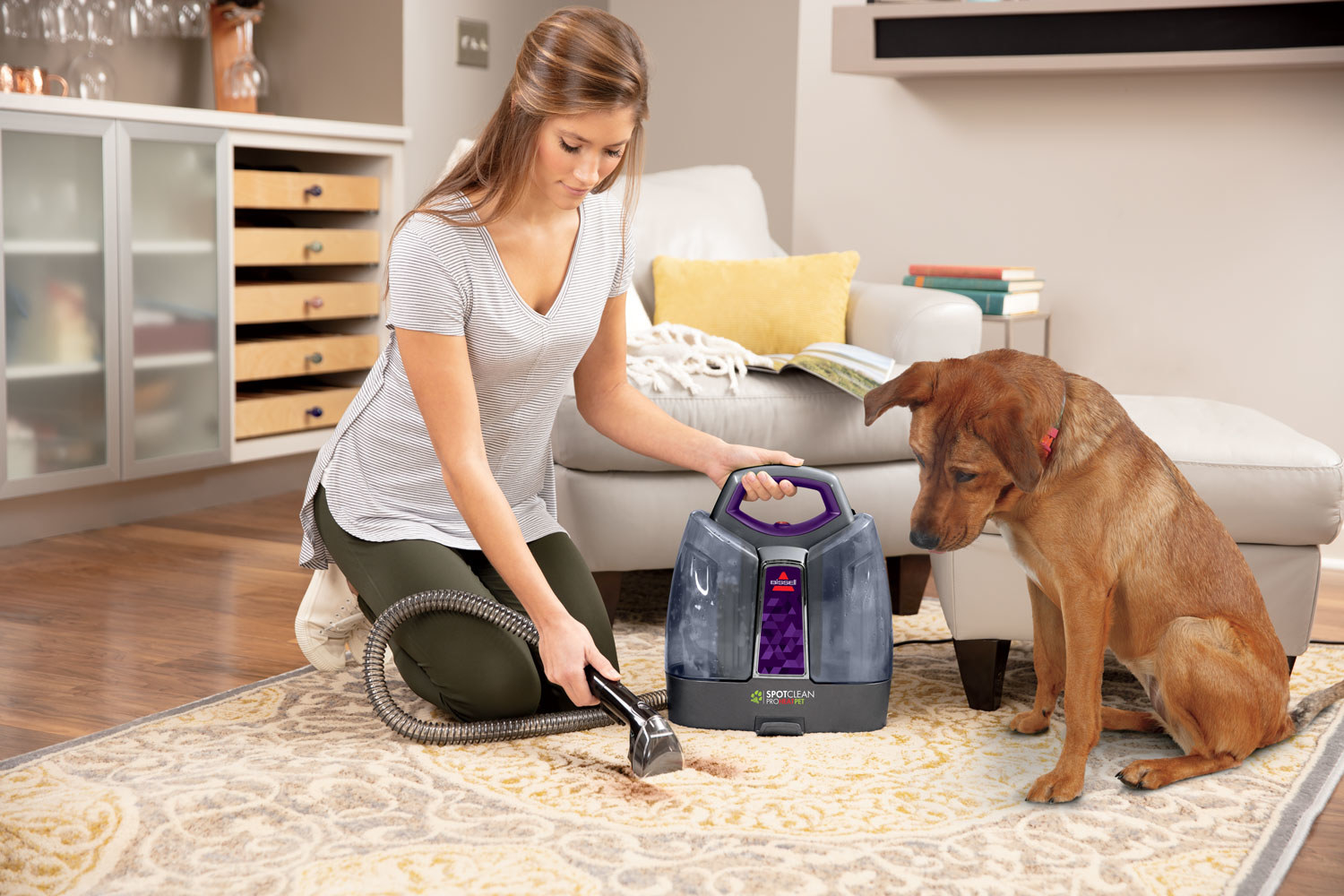 A person cleaning a stain on their carpet with the small handheld cleaner. Their dog is watching, guiltily.
