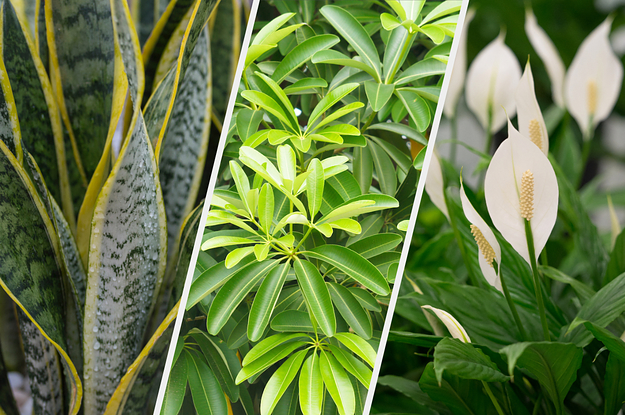 Most People Can't Identify These Houseplants — Can You?