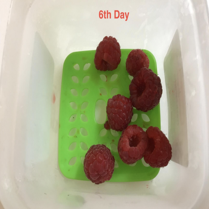 """A few leftover raspberries still in the container looking just as fresh with a caption that says """"sixth day"""""""
