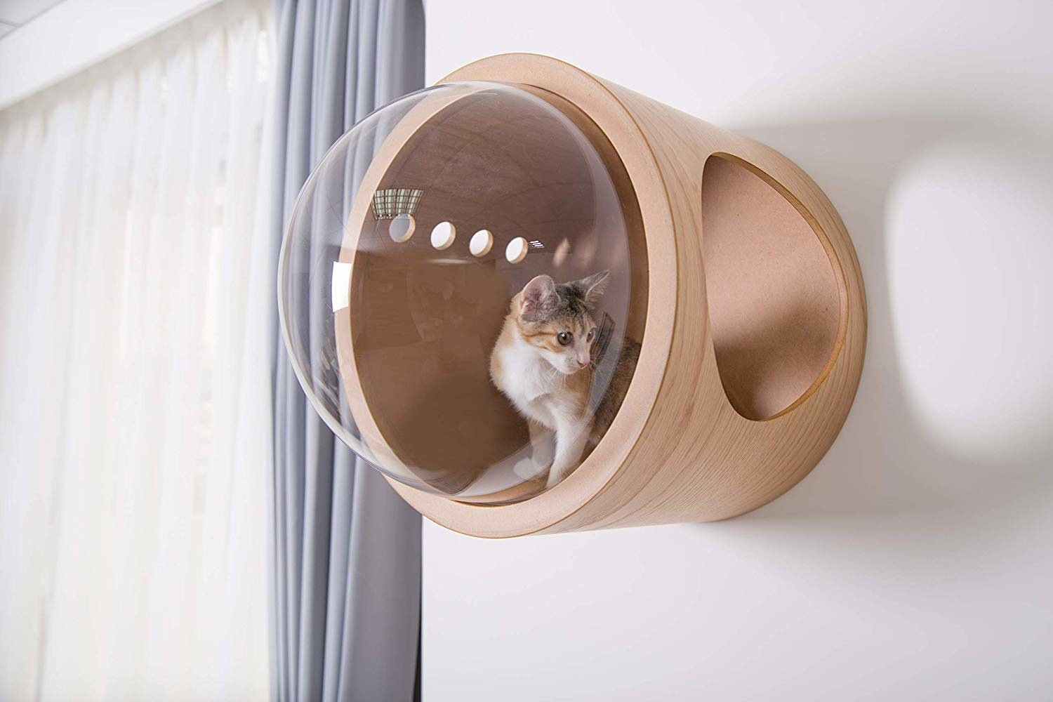 Cat inside clear plastic bubble and natural wood bed that is mounted on a wall