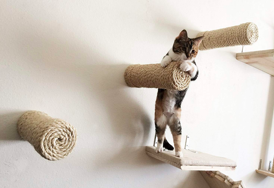 Cat climbing on rope-covered mounted poles