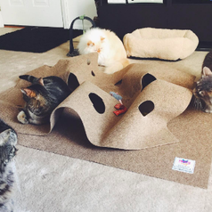 Several cats playing inside the ruffled, hole covered play mat