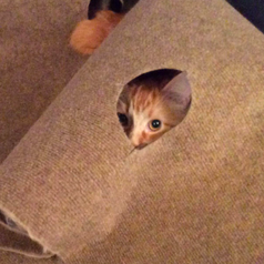 Cat peeking out of one of the holes