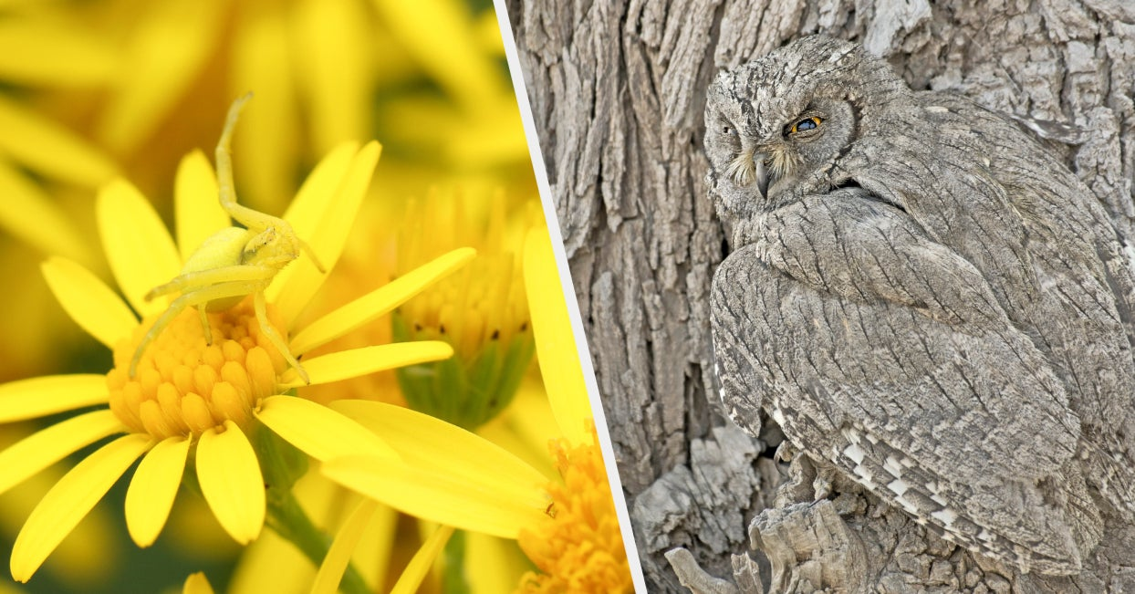 16 Animals That Are Just Really Really Good At Hiding