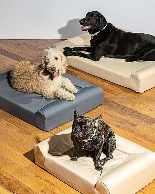 Dogs in their respective Wild One dog beds