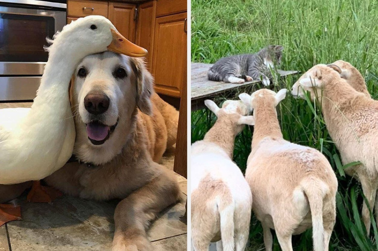 17 Unlikely Animal Friendships That Are 100% Cute And 200% Wholesome