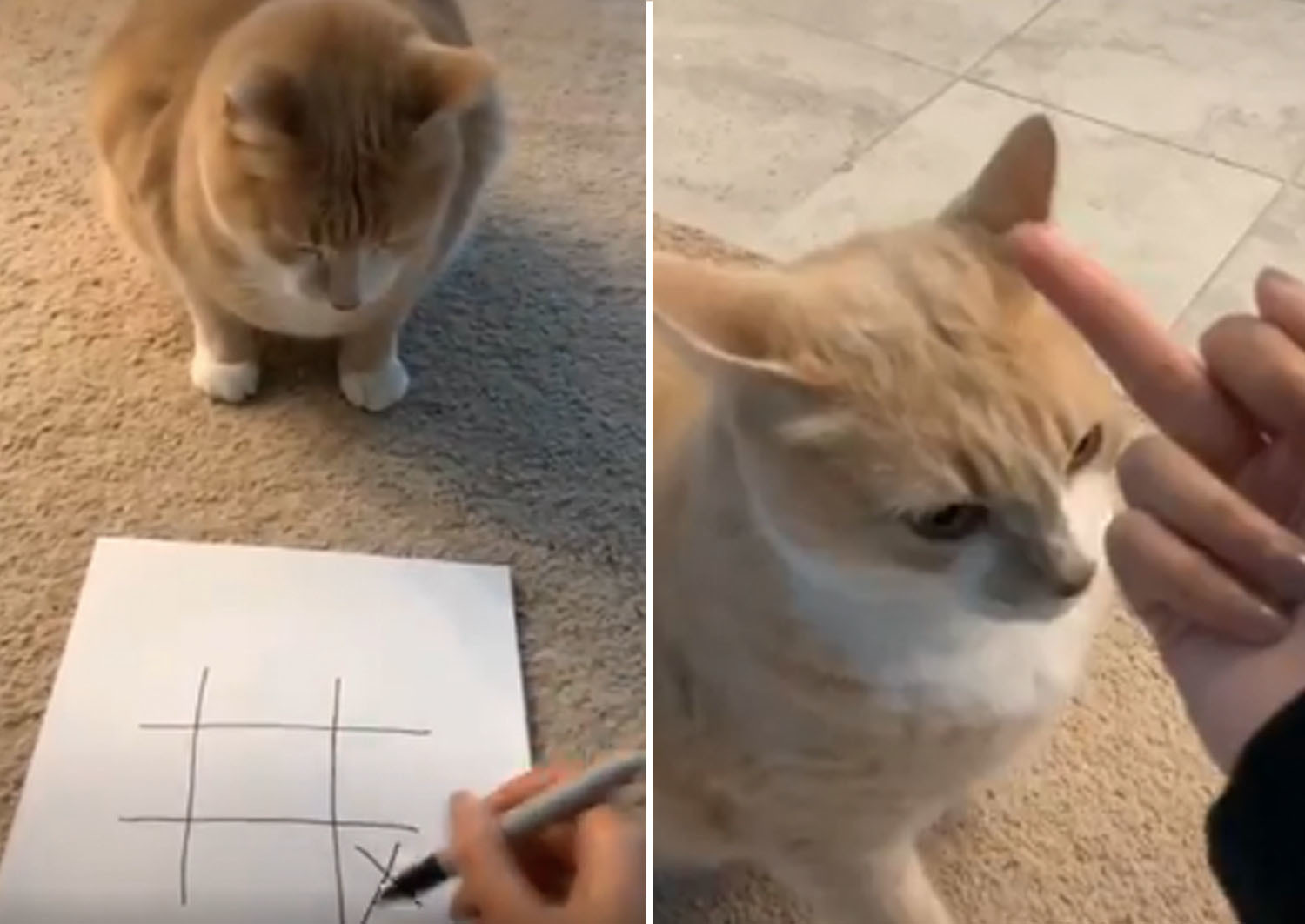 People Are Playing Tic-Tac-Toe With Their Pets, And It's Going Just As Well As You'd Expect
