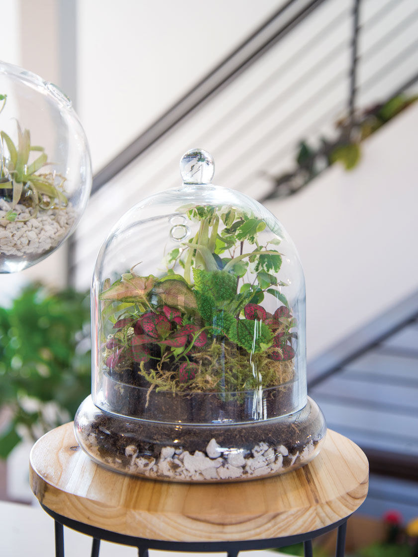 A large glass terrarium with plants, moss, soil, and bedrock