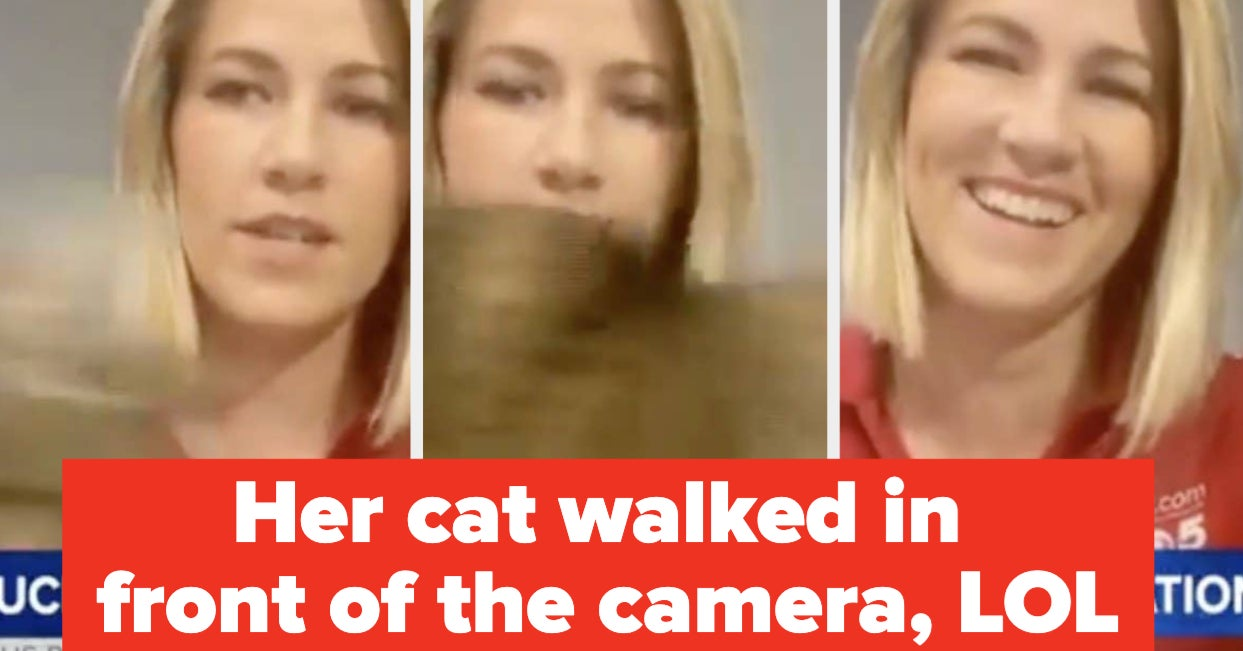 19 Newscasters' Attempts To Go Live From Home That Made Me Laugh And Feel Warm Inside