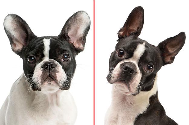 Die meisten Leute können diese Hunderassen nicht voneinander unterscheiden – und du?