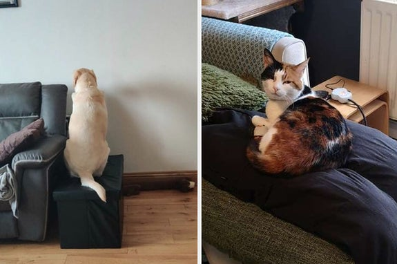 17 Pets Who Aren't Used To Their Owners Working From Home