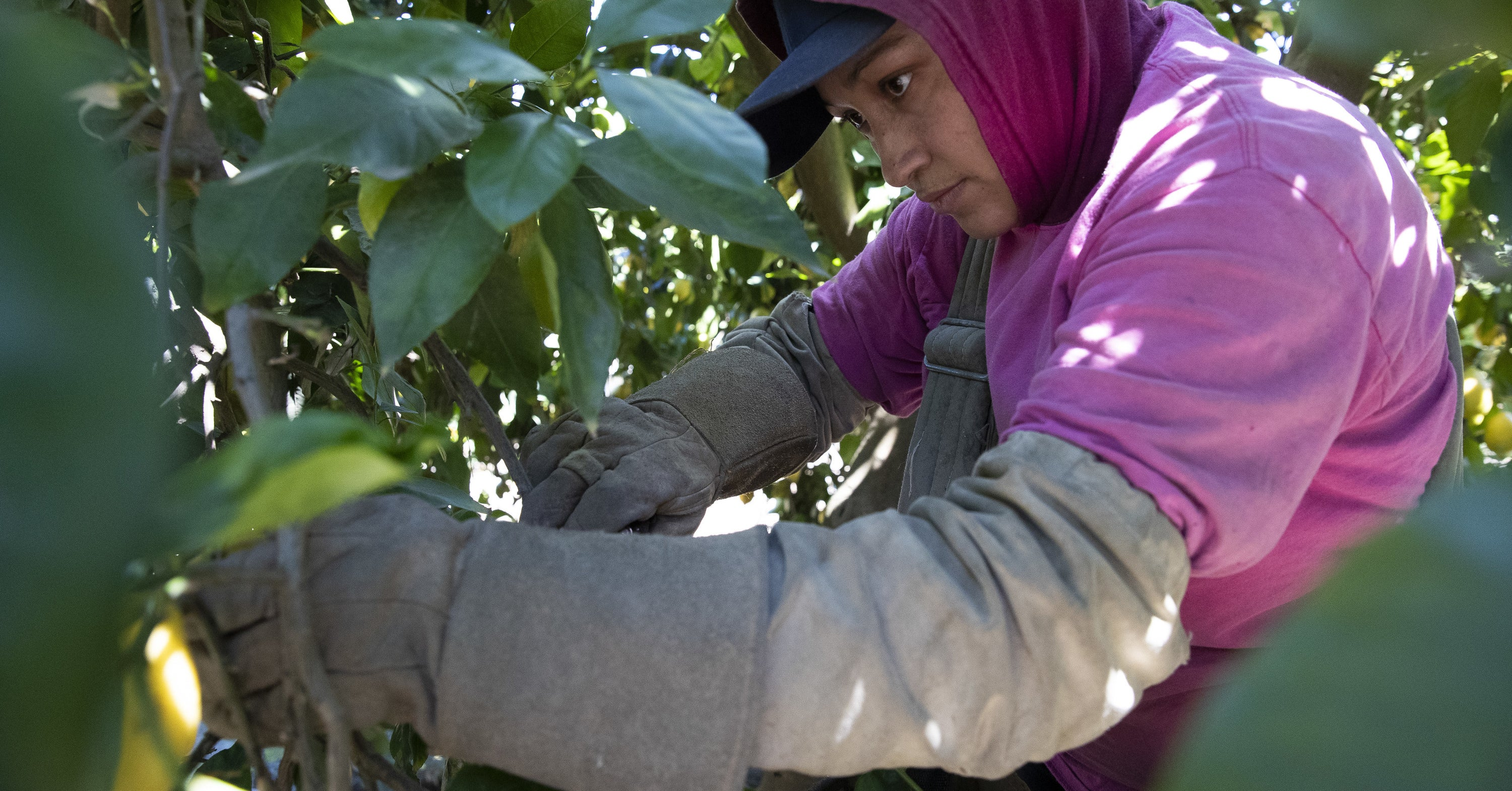 "Florida's Tens Of Thousands Of Farm Workers Face A Coronavirus ""Time Bomb,"" Advocates Say"