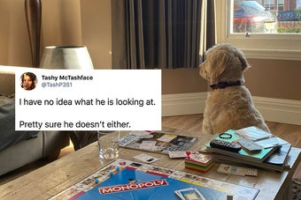 18 Pets Who Are Making Lockdown A Lot More Interesting For Their Owners