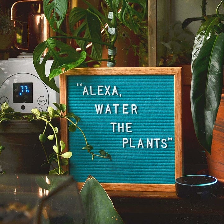 """A blue felt board with white letters that say """"alexa, water the plants"""""""